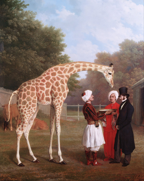 Fascinert av giraffer